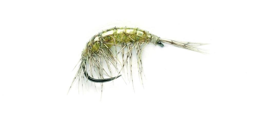 FullingMill_Freshwater_Shrimp