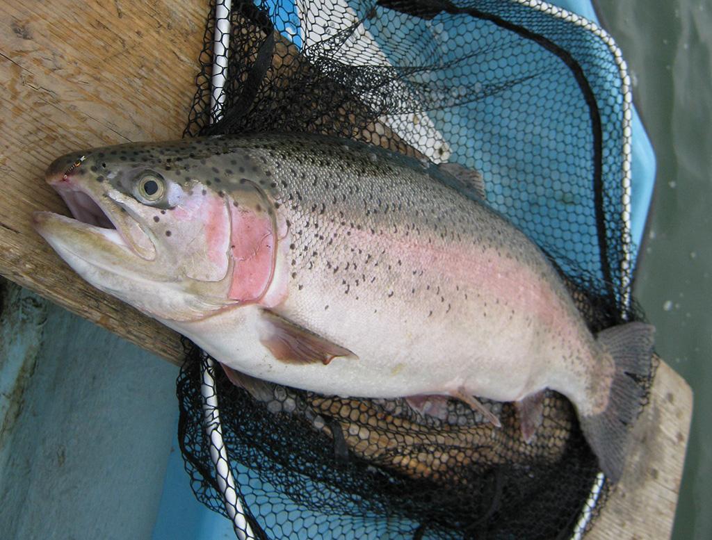 Buzzer Fishing Tactics