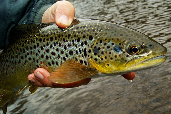 troutflies2