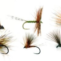 6 essential dry flies