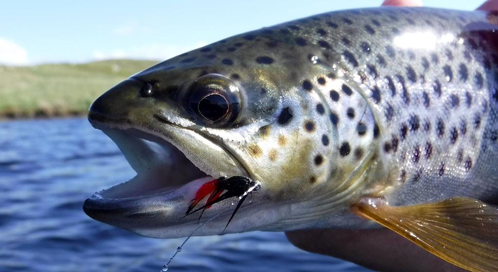 7 top tips on wet fly fishing