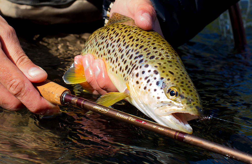top 10 trout fishing tips