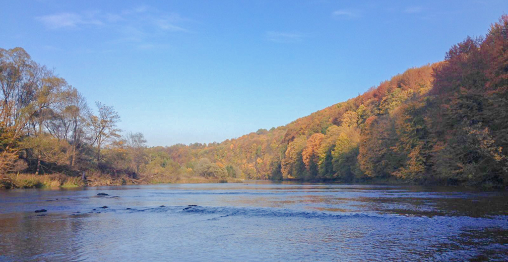 Dry fly fishing on the river San