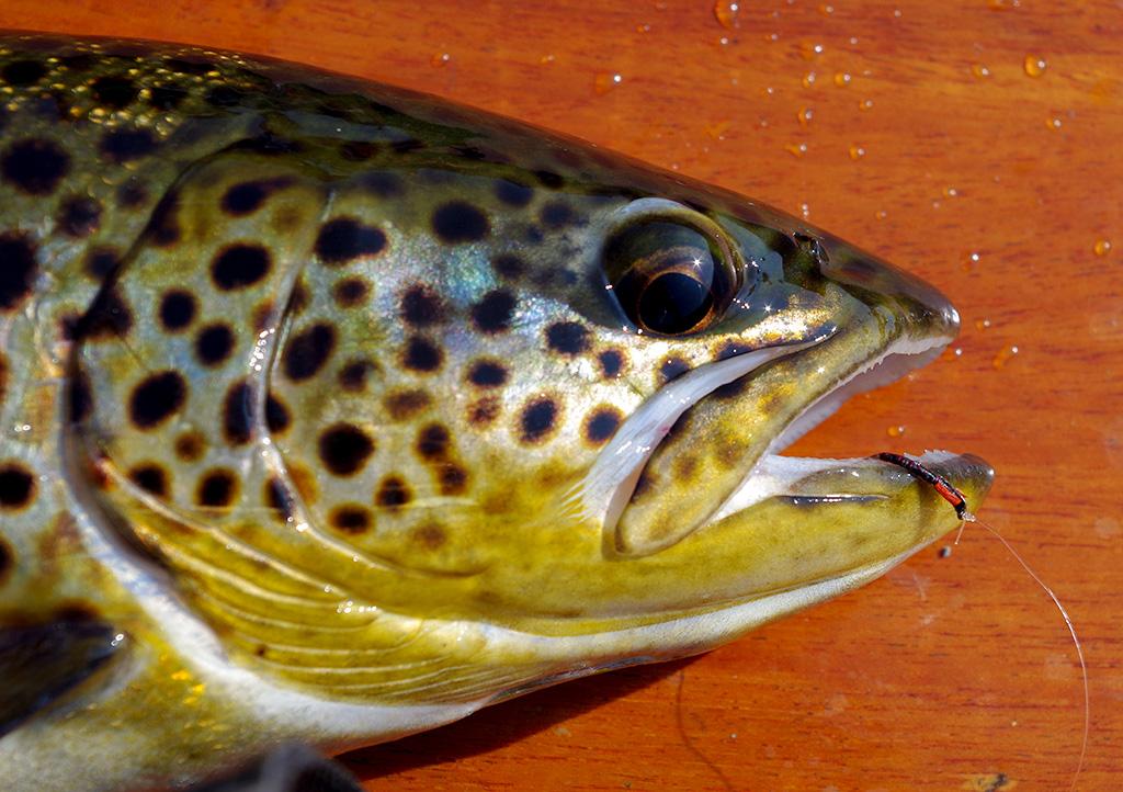 Duckfly on Corrib|Duckfly on Corrib|Duckfly on Corrib|Duckfly on Corrib|Duckfly on Corrib|Duckfly on Corrib|