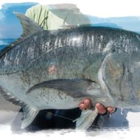Giant Trevally Nyap