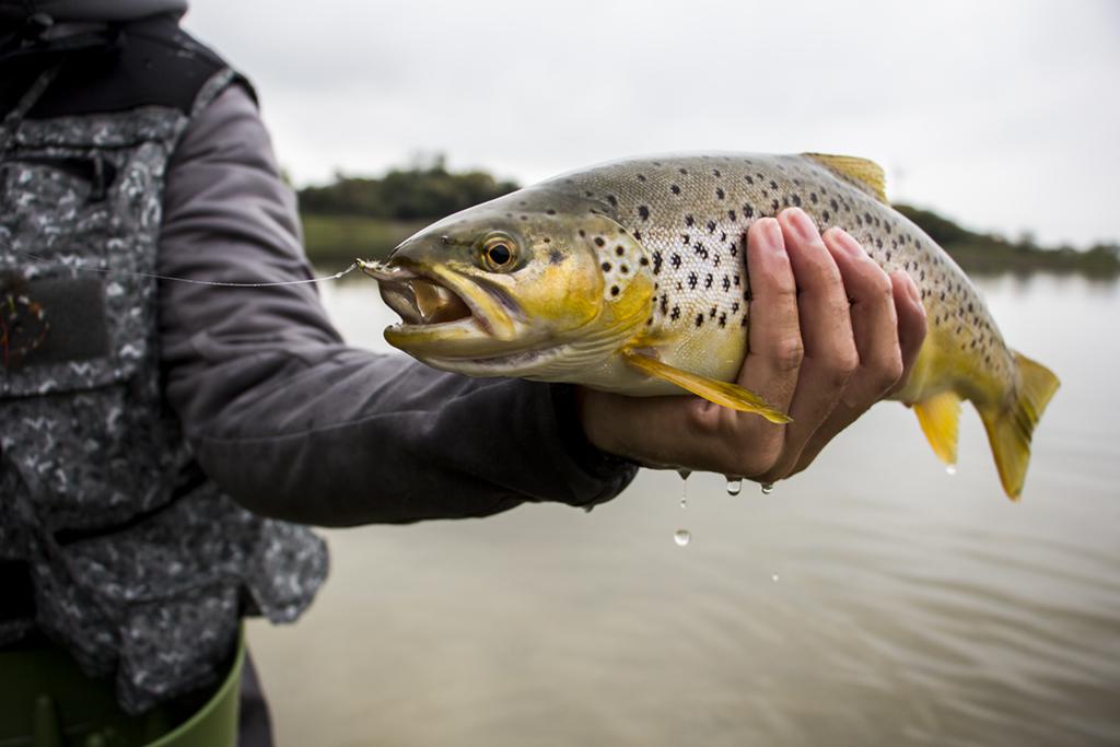 Fishing Fry Patterns