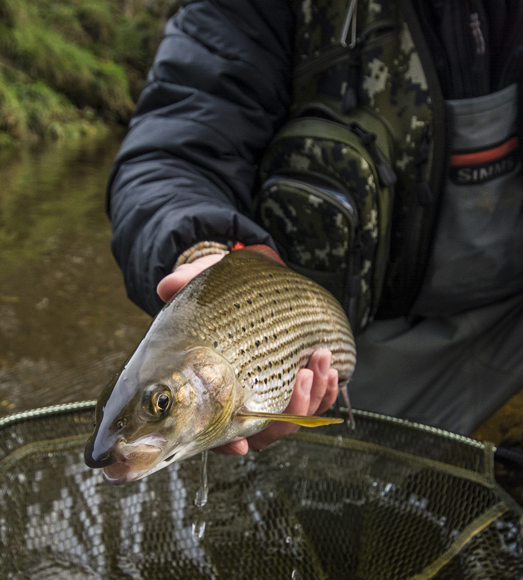 Duo fishing for Grayling