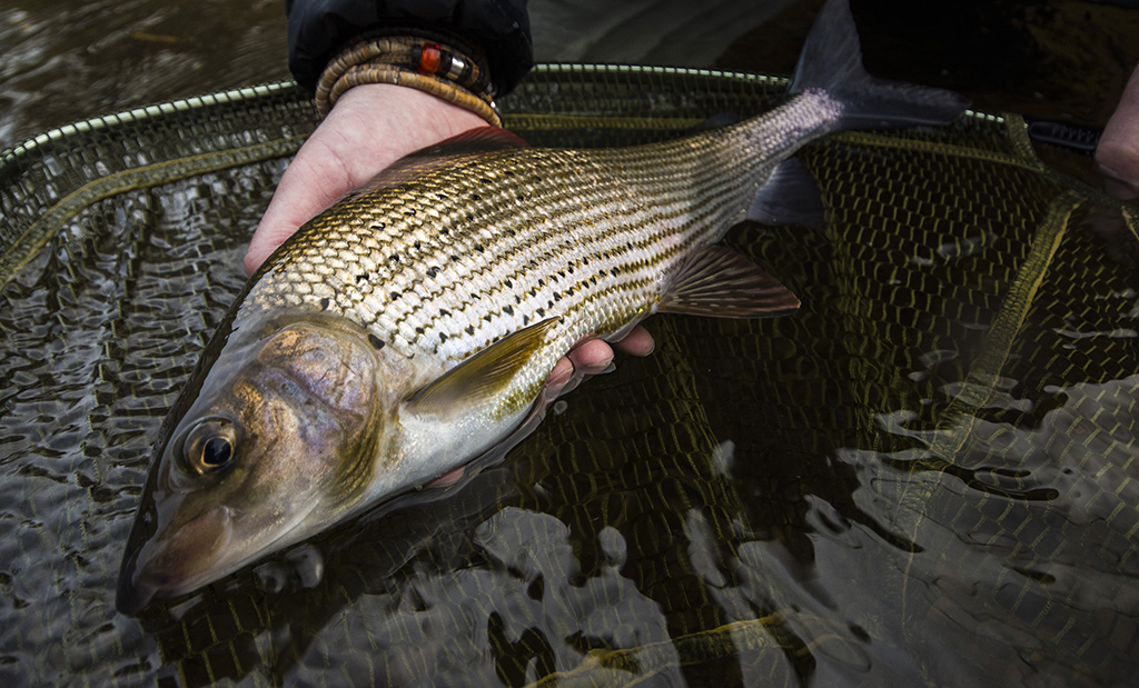 Duo fishing for Grayling|Duo fishing for Grayling|Duo fishing for Grayling|Duo fishing for Grayling|Duo fishing for Grayling|Duo fishing for Grayling|Duo fishing for Grayling|Duo fishing for Grayling|Duo fishing for Grayling|Duo fishing for Grayling|Duo fishing for Grayling