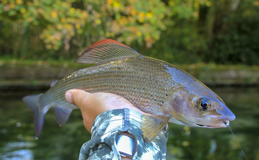 Nymphing for Grayling