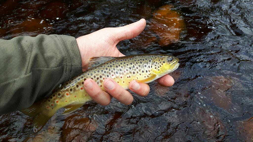 Late Season River Fishing Tips
