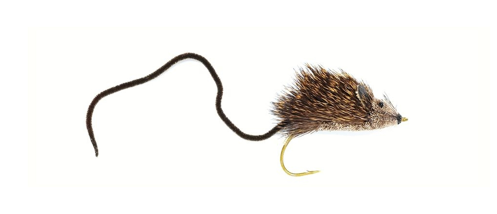 New Zealand Mouserat