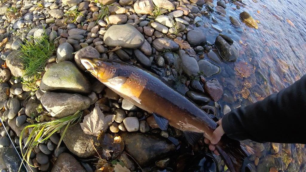 late season salmon fishing