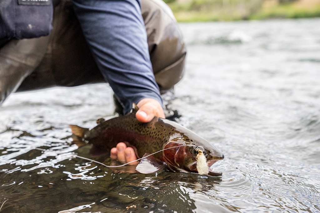 SalmonFly Fishing