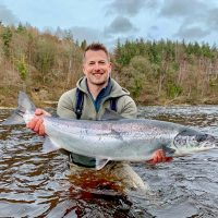 Springer Salmon|Springer Salmon|Springer Salmon|Springer Salmon Flies
