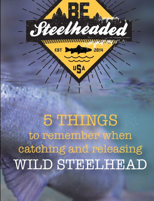 Steelhead tips Steelhead tips Steelhead tips