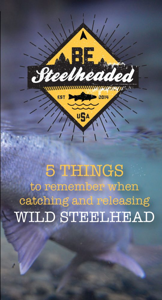 Steelhead tips|Steelhead tips|Steelhead tips