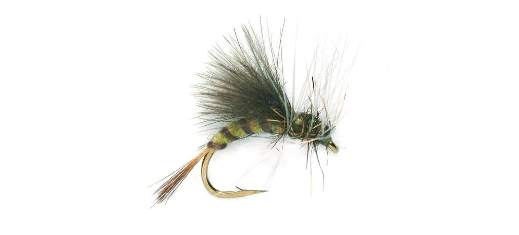 dry fly fishing for grayling olive
