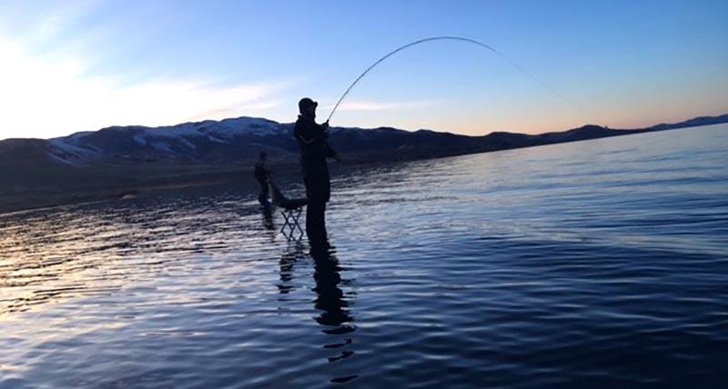 fishladder