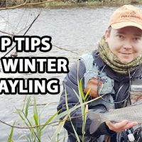 winter grayling
