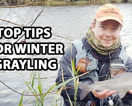 winter grayling
