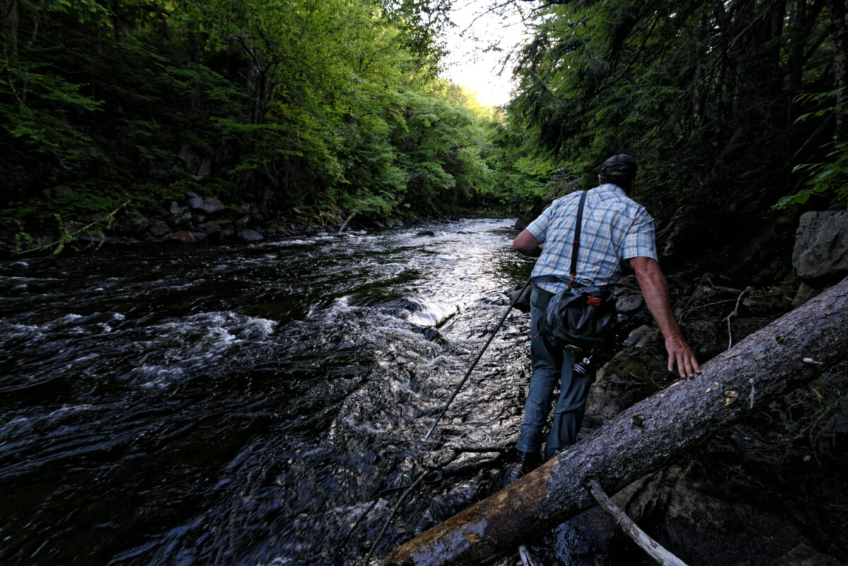 An angler wades for bass along the side of a stream in July.