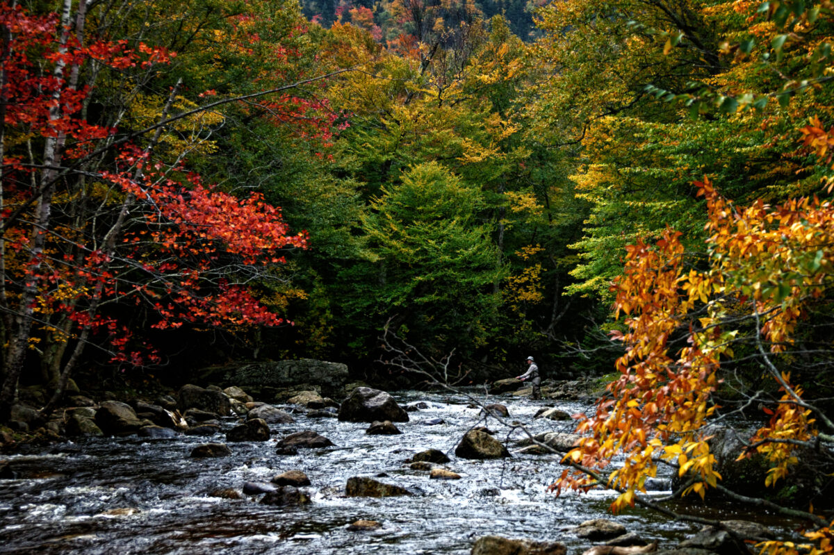 An angler stands while casting in a river surrounded by red, yellow and orange foliage.
